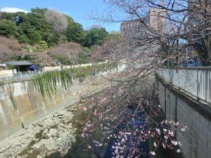 4駒塚橋 (3)