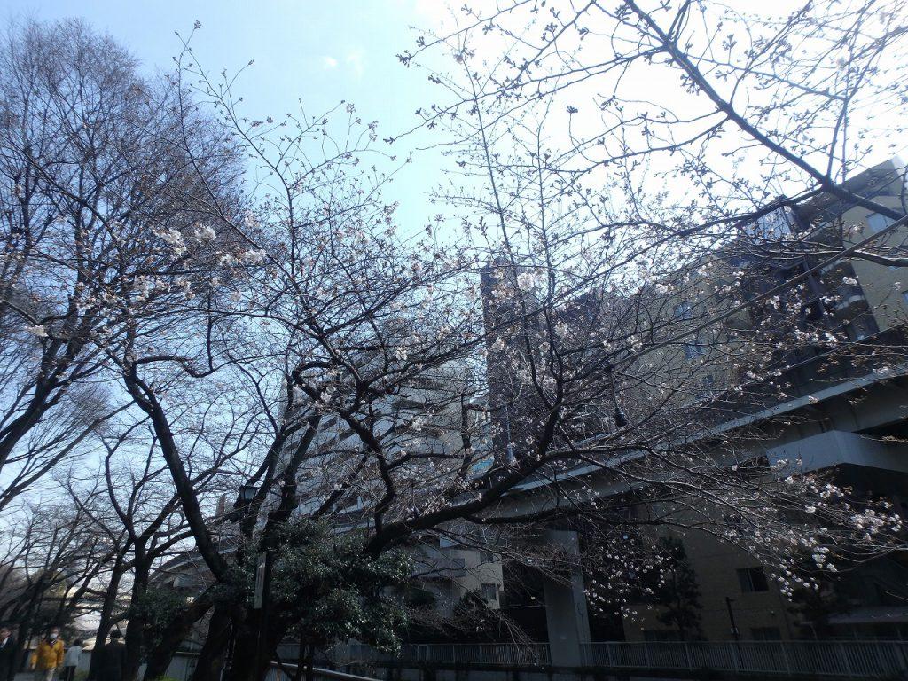 2一休橋 (6)