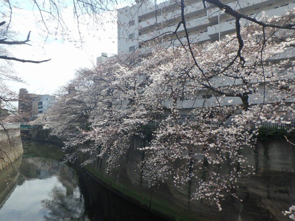 5豊橋~駒塚橋