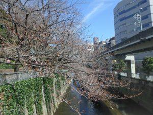 2一休橋 (1)