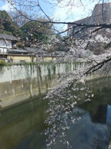 4芭蕉庵と5椿山荘