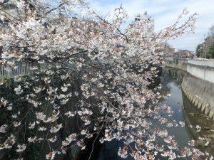 ④駒塚橋 (2)