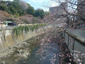 ④駒塚橋 (1)
