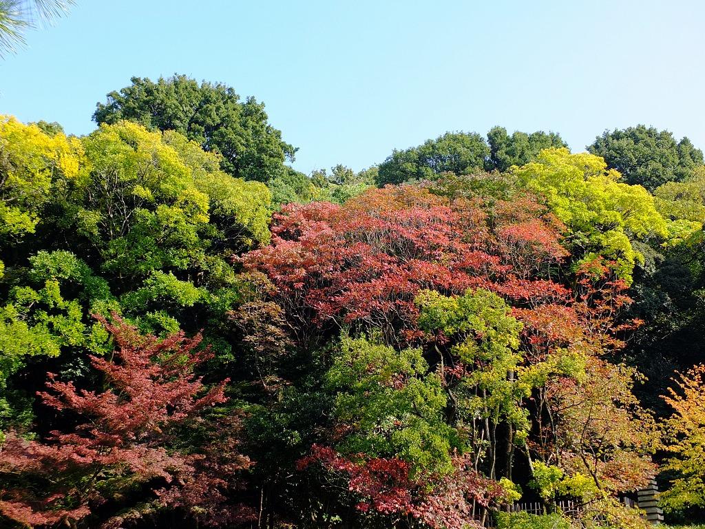 ★斜面の紅葉