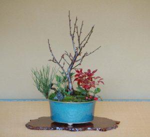 盆栽教室完成 写真